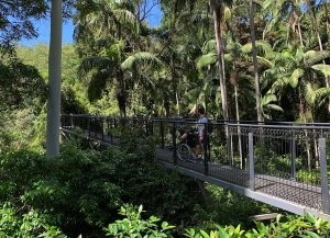 Mountain Tamborine Rainforest skywalk